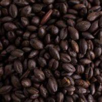thomas-fawcett-and-sons-black-malt-(lovibond-410-500)-1-lb-256px-256px